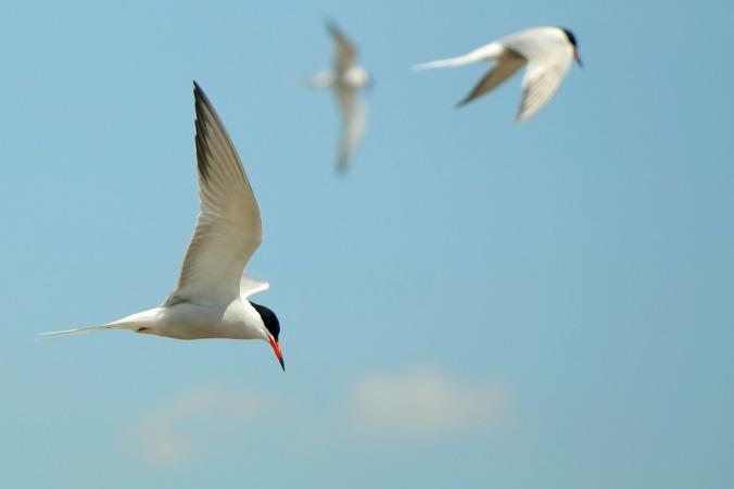 seagull-1402983_960_720
